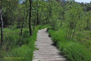 Holzsteg im Birgeler Urwald